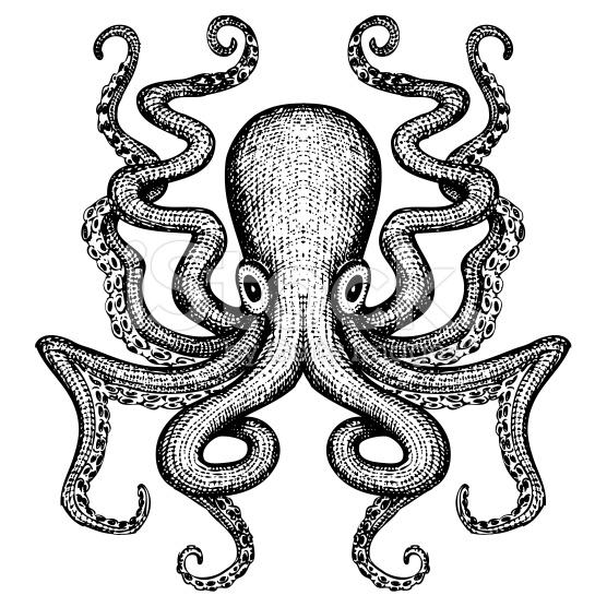 stock-illustration-61597588-giant-octopus