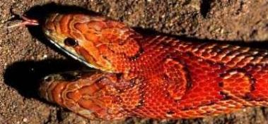 1_2head-snake